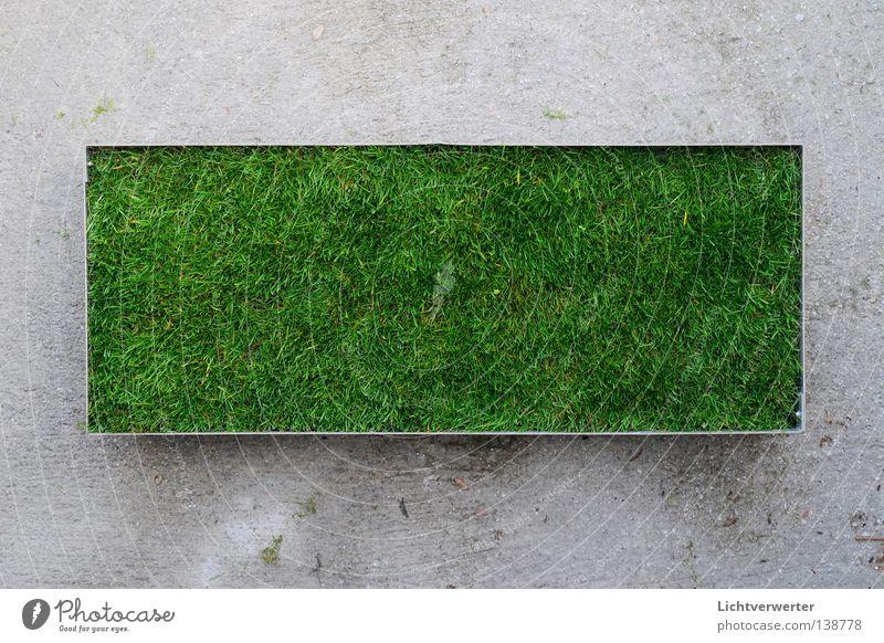 das kleine gruene grün Wiese Beton Rasen Verkehrswege Rest Rechteck Lunge Grünfläche