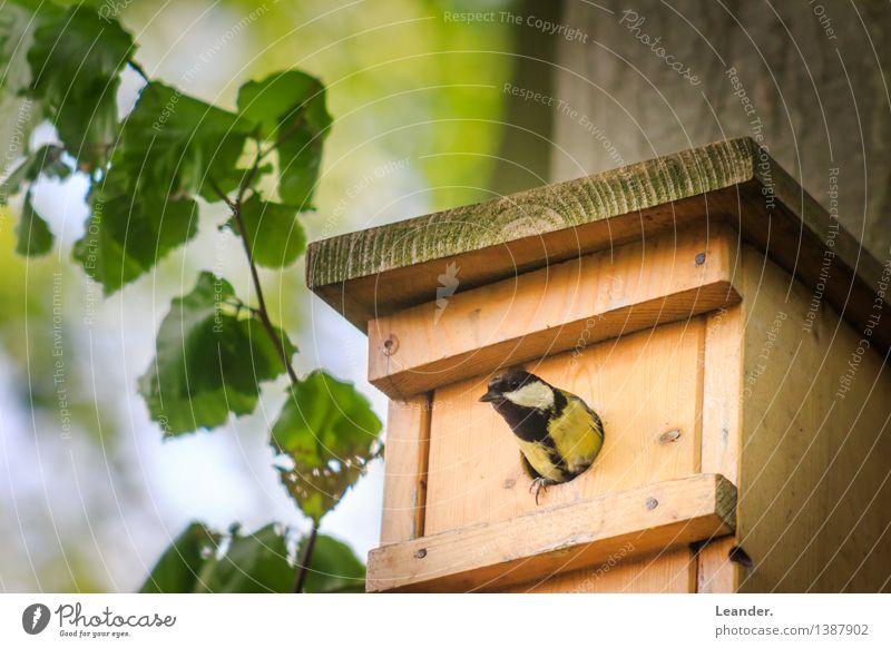 Vogel guckt aus sein Vogelhaus Natur grün Sommer Landschaft ruhig Tier Umwelt Frühling Glück Garten Park Idylle ästhetisch Wachsamkeit Inspiration