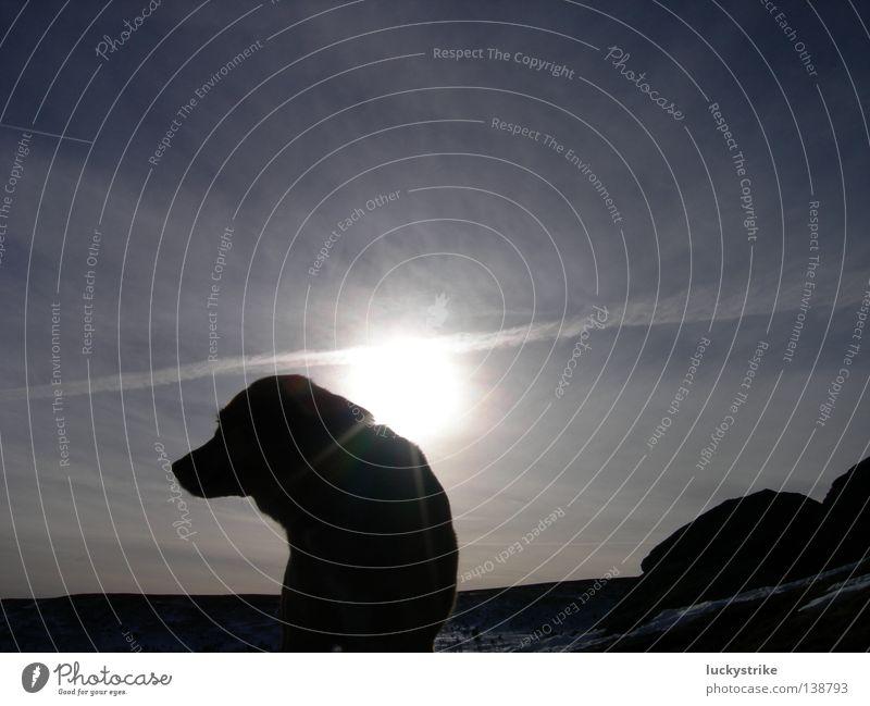 so alone Himmel Sonne blau Ferien & Urlaub & Reisen Wolken Einsamkeit Tier Schnee Berge u. Gebirge Hund Traurigkeit warten gehen sitzen Trauer Spaziergang
