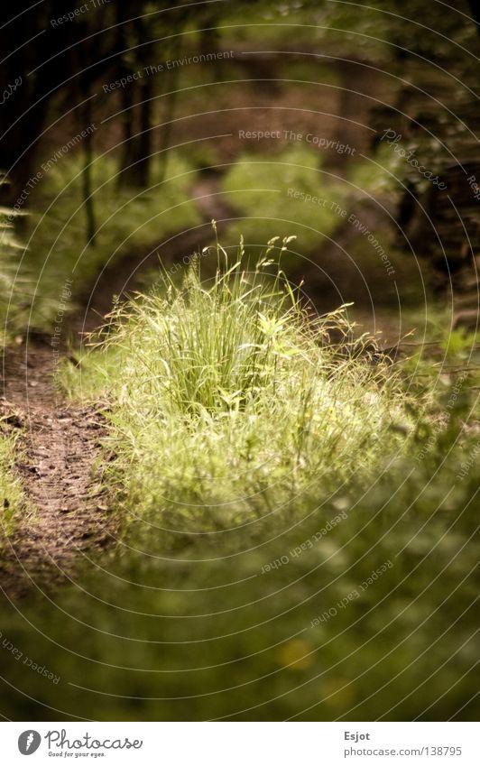 light my way Wald Spuren Fußweg Waldlichtung Aachen Holzmehl
