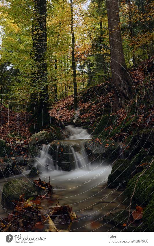 Herbstwald Umwelt Natur Landschaft Wasser Klima Baum Wald Bach Wasserfall Stimmung Traurigkeit Trauer Blatt Bregenzerwald Wildbach waldbach Farbfoto