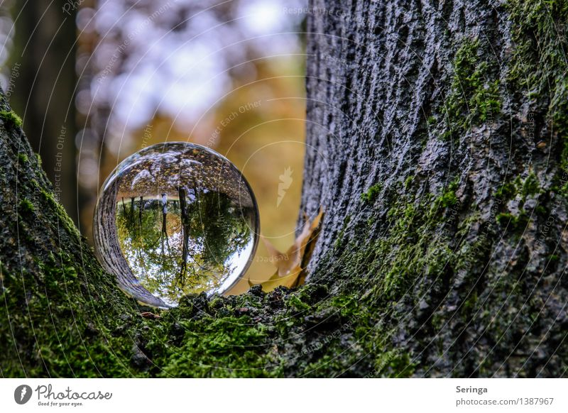 Blick durch die Kugel 1 Umwelt Natur Landschaft Pflanze Tier Sonnenlicht Schönes Wetter schlechtes Wetter Baum Sträucher Park Wald Fernglas Glas beobachten