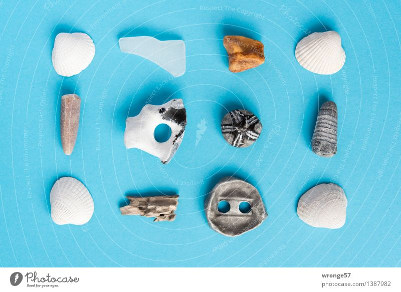 Strandgut I Küste Stein Glas Metall alt maritim Originalität blau braun weiß Stillleben Muschel Muschelschale Bernstein Seeigel Fossilien Fundstück Holz Altholz
