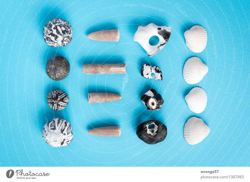 Strandgut II Küste Stein alt maritim blau braun schwarz weiß Stillleben Muschel Muschelschale Fossilien Seeigel Fundstück Super Stillleben Querformat Farbfoto