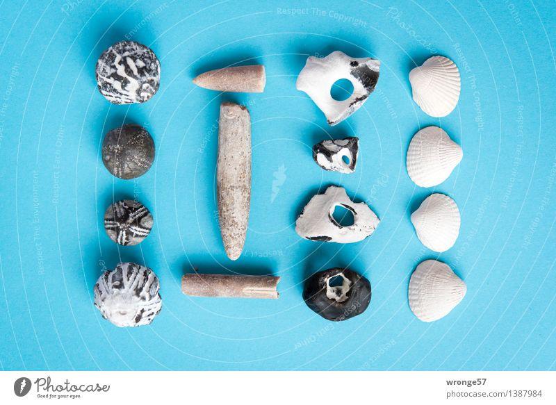 Strandgut III Küste Stein alt maritim blau braun schwarz weiß Stillleben Muschel Muschelschale Fossilien Seeigel Fundstück Super Stillleben Querformat Farbfoto