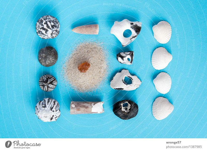 Strandgut IV Küste Stein Sand alt maritim blau braun schwarz weiß Stillleben Muschel Muschelschale Fossilien Seeigel Bernstein Fundstück Super Stillleben