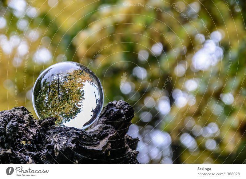 Blick durch die Kugel 7 Umwelt Natur Landschaft Pflanze Tier Herbst Garten Park Wiese Feld Wald Lupe Glas glänzend leuchten Glaskugel Farbfoto Gedeckte Farben