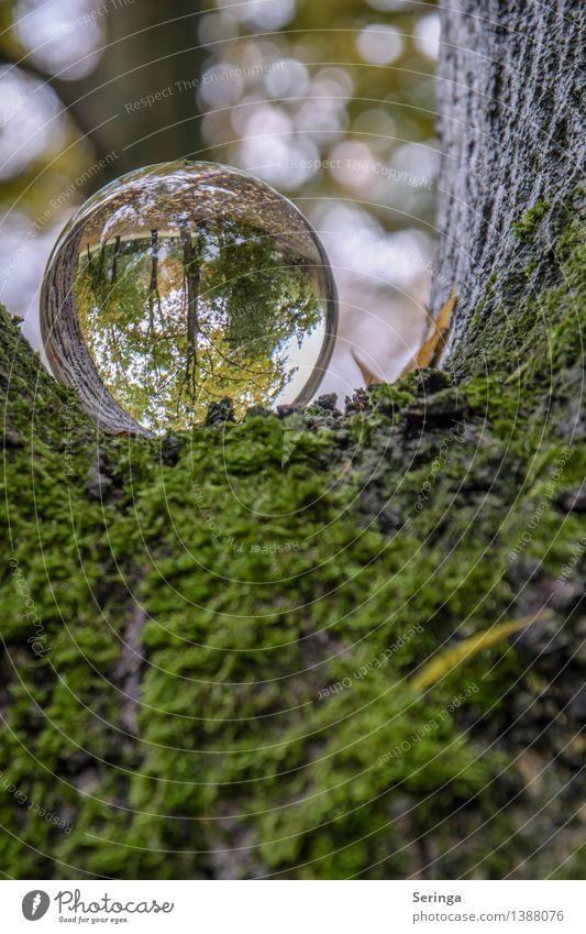 Blick durch die Kugel 6 Umwelt Natur Landschaft Pflanze Tier Herbst Garten Park Wiese Feld Wald Lupe Glas glänzend leuchten träumen Glaskugel Farbfoto