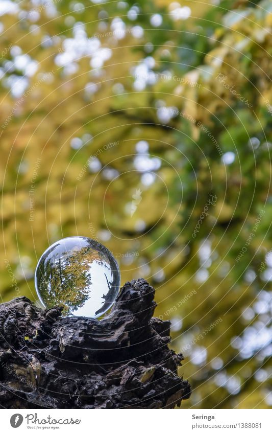 Blick durch die Kugel 2 Ferien & Urlaub & Reisen Umwelt Natur Landschaft Pflanze Tier Horizont Herbst Baum Garten Park Wald Architektur Spiegel Lupe
