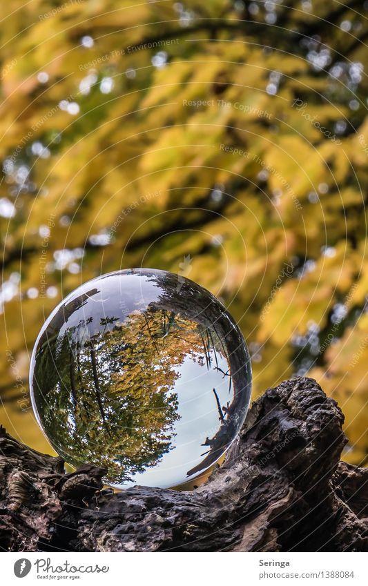 Blick durch die Kugel 4 Umwelt Natur Landschaft Pflanze Tier Herbst Baum Garten Park Wiese Wald Lupe Glas glänzend träumen Glaskugel Farbfoto Gedeckte Farben