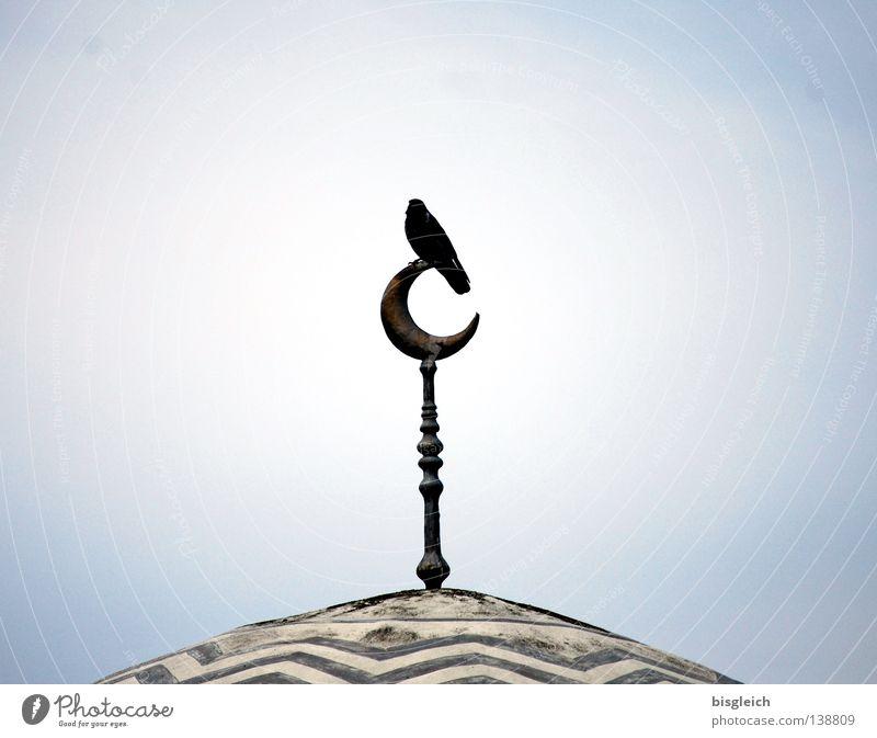 Wächter des Tages II Himmel Religion & Glaube Vogel Dach Asien Ornament Moral Islam Moschee Philosophie Halbmond