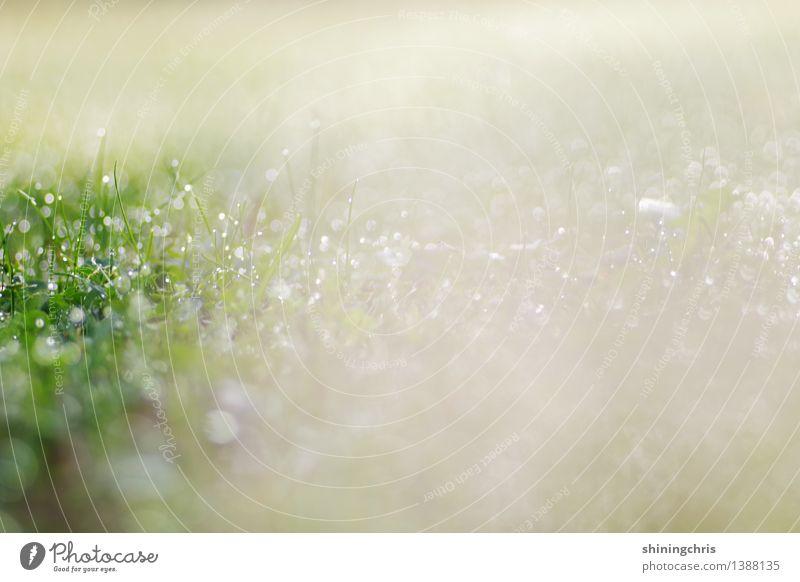 150 !! glitzerregen! Natur Landschaft ruhig Herbst Wiese glänzend Wassertropfen Klima Tau