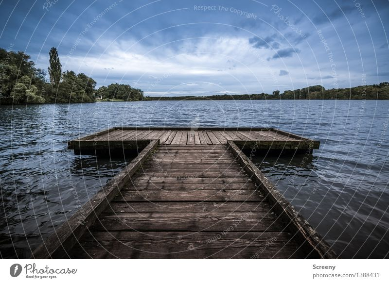 Big T Himmel Natur Ferien & Urlaub & Reisen Pflanze blau Sommer Wasser Baum Landschaft Wolken See braun Horizont Wellen Idylle Sträucher