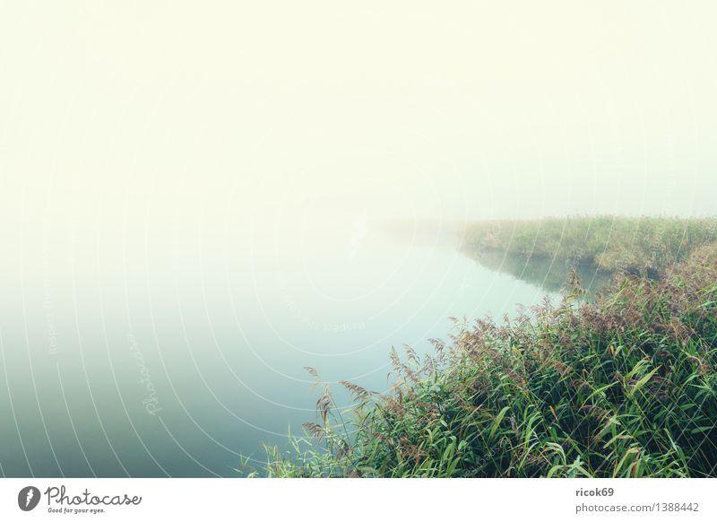 Nebel Natur Pflanze grün Wasser Landschaft ruhig Wetter Nebel Fluss Schilfrohr Dunst Mecklenburg-Vorpommern trüb Rostock Wasserpflanze