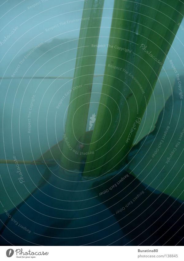 Im Nebel Wasser grün Pflanze Sommer Blatt dunkel Angst Nebel gruselig Halm Teich Panik unheimlich Sumpf Wasserpflanze