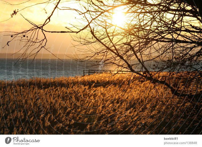 lights go off Wasser Himmel Sonne Meer Strand Herbst Wärme orange Feld Physik Ast Zweig