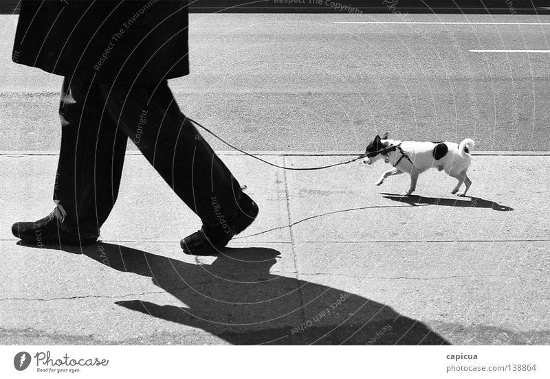 chihuahua Schwarzweißfoto Mann Verkehrswege dog stroll walk board walk black & white pet small sun shadow man man with dog spotted coat cold leash on a leash