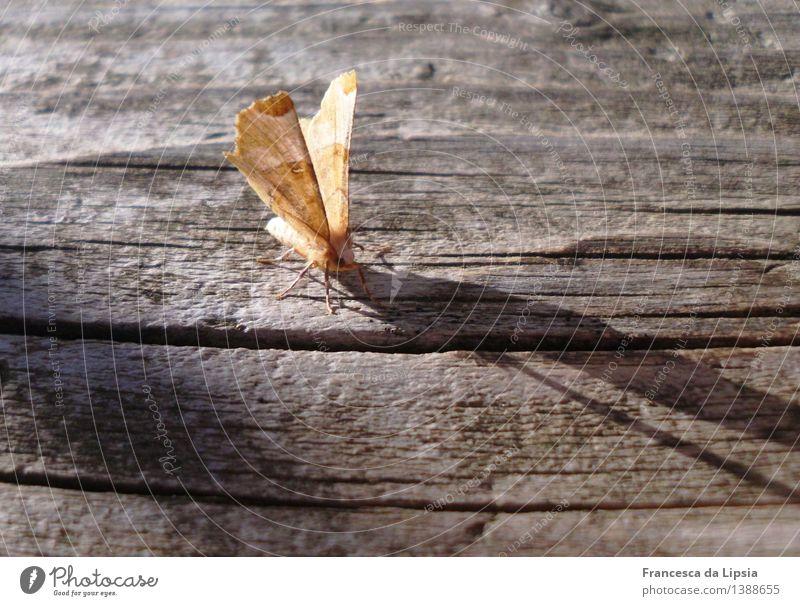 Motte am Morgen Natur Sommer Erholung ruhig Tier natürlich Holz Garten braun orange frisch Idylle Wildtier gold ästhetisch warten
