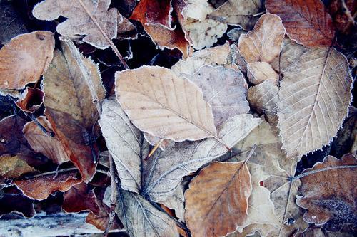 Eingefrorener Herbst Natur Pflanze weiß Blatt ruhig Winter kalt Gesundheit braun Zufriedenheit Eis frisch elegant Kraft ästhetisch