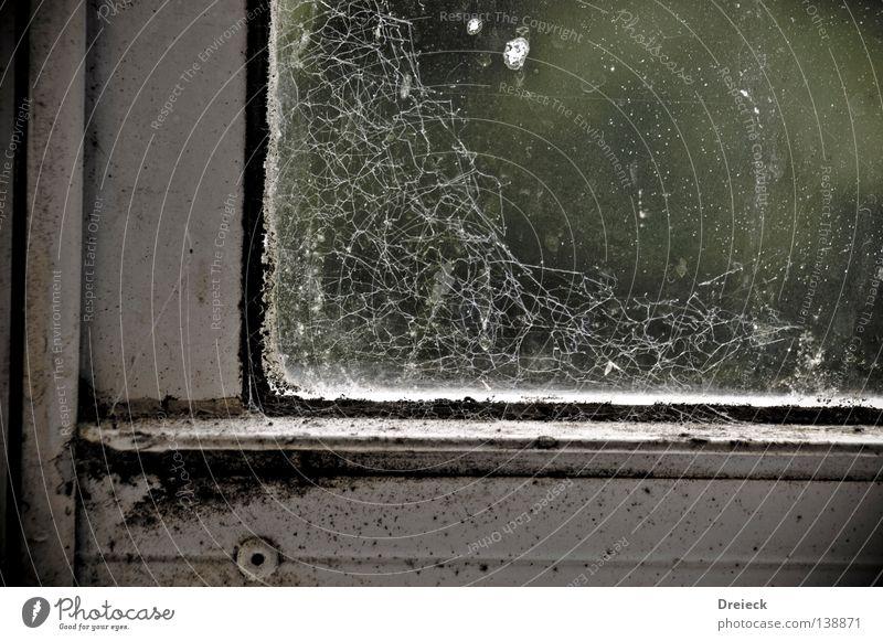 Bakteriell Fenster Bakterien dreckig Spinnennetz Staub Schädlinge Häusliches Leben Verkeimt Fensterscheibe Glas
