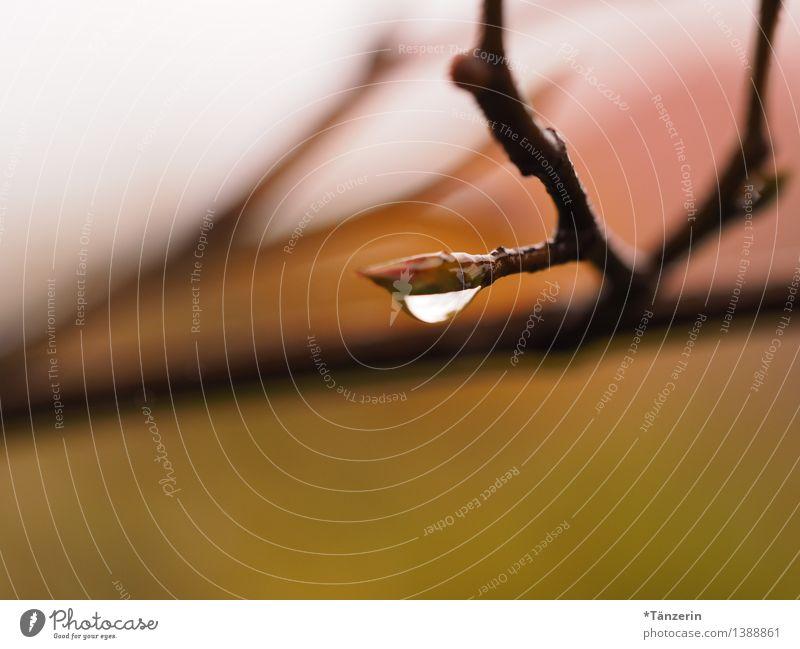 Raindrop III Umwelt Natur Pflanze Urelemente Wassertropfen Herbst schlechtes Wetter Regen Baum Zweige u. Äste Garten Park ästhetisch frisch nass natürlich schön