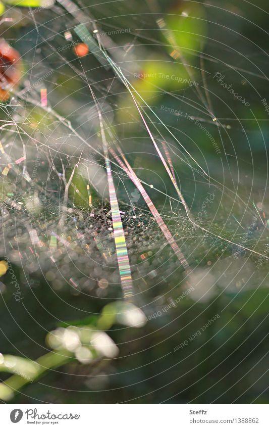 Lichtnetzwerk im Wald Spinnennetz Netz Netzwerk Vernetzung Netzbau Linien leicht Spinngewebe Spinnenfäden Fäden netzartig Querverbindung durcheinander abstrakt