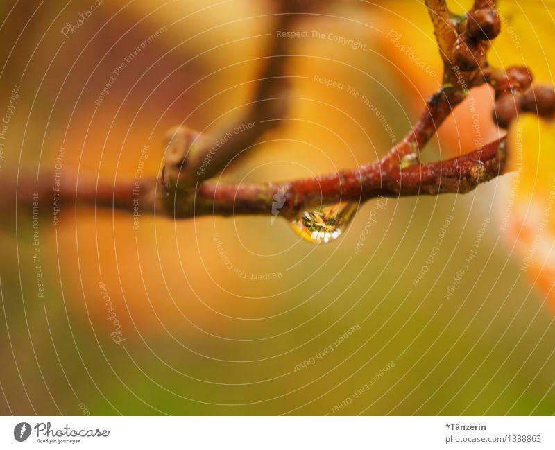 Raindrop IV Umwelt Natur Pflanze Urelemente Wassertropfen Herbst schlechtes Wetter Regen Zweige u. Äste Park Wald ästhetisch frisch schön grün orange achtsam