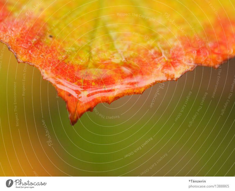Herbstwetter IV Natur Pflanze grün Wasser Baum Landschaft Blatt Wald gelb natürlich Garten Regen Park orange Wetter