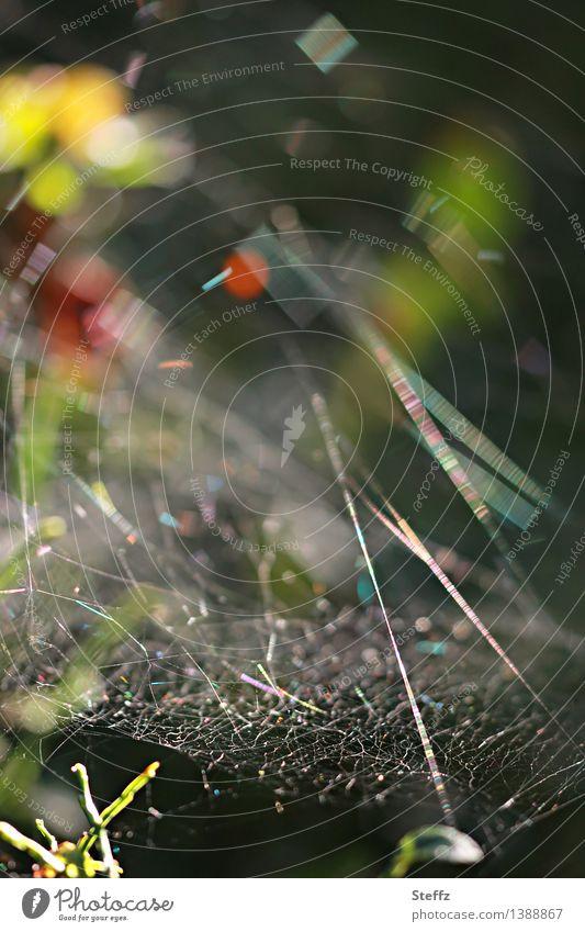 lichtvoll vernetzt Natur Sommer Herbst Wald Spinnennetz nah natürlich schön Lichtstimmung chaotisch Farbe Netzwerk Symmetrie netzartig Lichtspiel Lichtpunkt