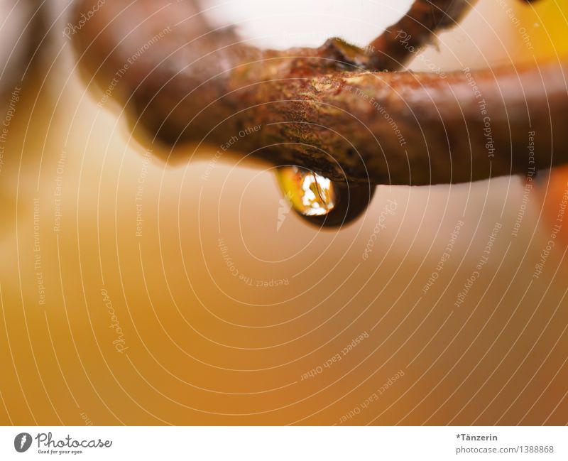 Raindrop I Umwelt Natur Pflanze Urelemente Wasser Wassertropfen Herbst schlechtes Wetter Regen Baum Zweige u. Äste Garten Wald ästhetisch frisch nass natürlich