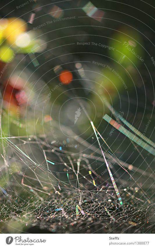 Spinnennetz-Universum Natur Sommer Herbst Wald glänzend fantastisch natürlich schön grün rot Lichtstimmung Waldstimmung chaotisch Netzwerk Symmetrie abstrakt