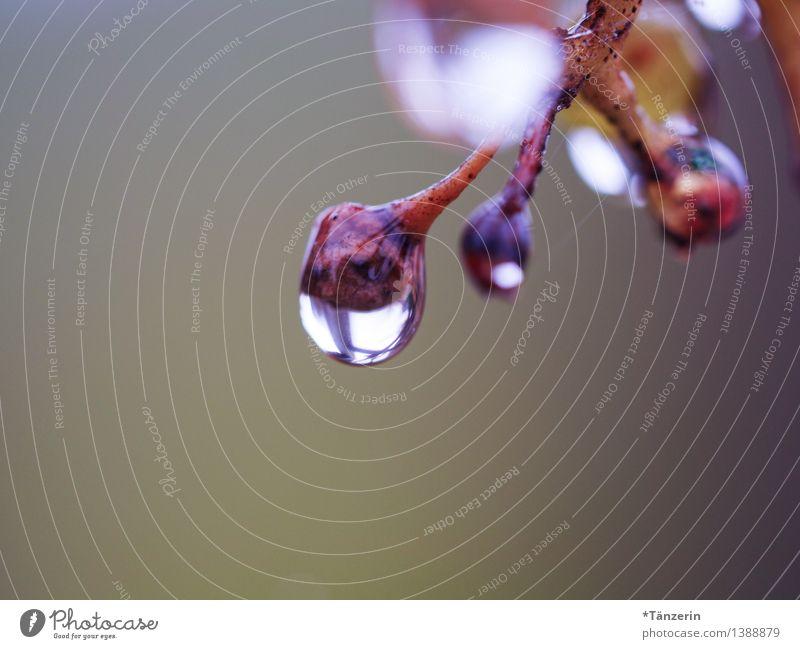 große Regentropfen III Natur Pflanze schön Wasser Baum ruhig Wald Traurigkeit natürlich Garten braun Stimmung Park Wetter frisch