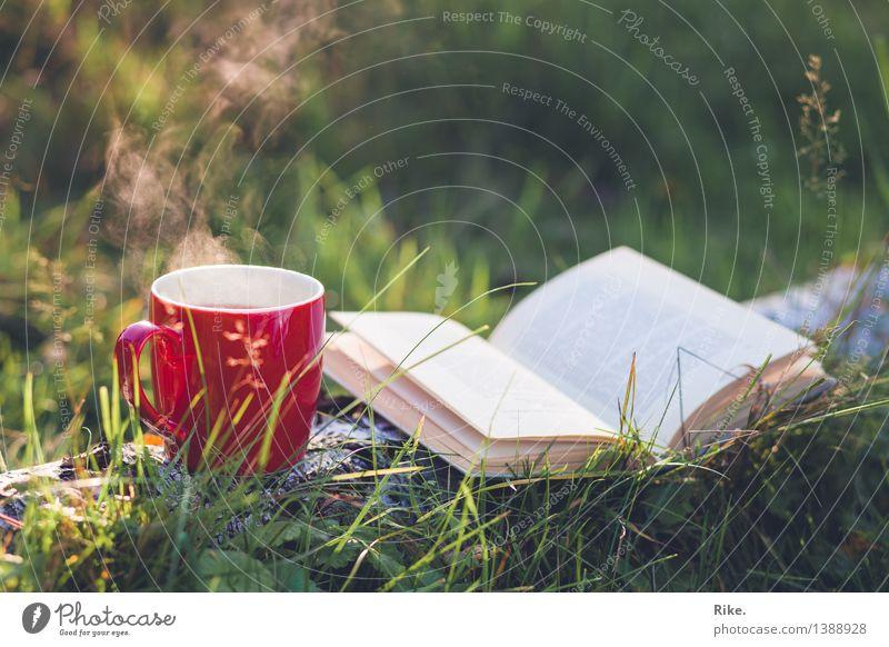 Auszeit. Getränk trinken Heißgetränk Tee Tasse Gesundheit Gesunde Ernährung Wohlgefühl Erholung ruhig Natur Herbst Schönes Wetter Pflanze Baum Gras Garten Wald