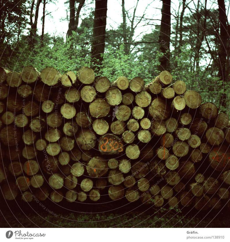 Holz vor der Hüttn Wald Abholzung schlagen Nutzholz Rohstoffe & Kraftstoffe nachwachsender Rohstoff Baumstamm Fahrradweg Sträucher Blatt Jahresringe Umwelt