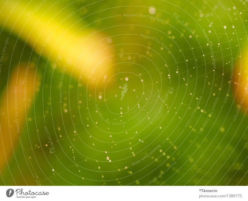 Netzwerk II Natur Sommer Herbst Schönes Wetter Garten Park ästhetisch Fröhlichkeit frisch natürlich positiv schön gelb grün achtsam ruhig zart Spinnennetz Tau