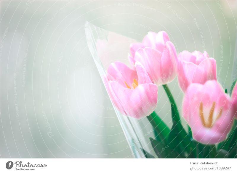 Natur Pflanze schön Blume Blüte authentisch einfach niedlich Postkarte Tulpe Tulpenblüte