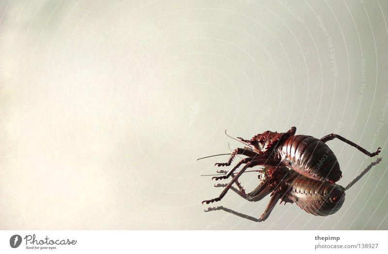 invasion der käfer Fühler Spiegel krabbeln Schiffsbug rot weiß schwarz Spinne Käfer Fuß Beine gepanzert Angst