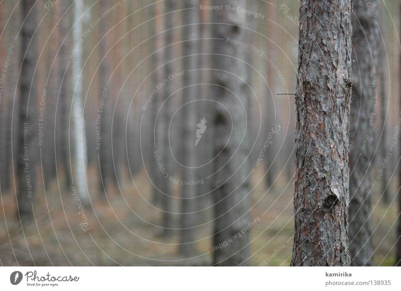 rohbau Natur Baum Winter Wald Traurigkeit Landschaft Raum Umwelt Perspektive Trauer mehrere Klima Ast Baumstamm Gesellschaft (Soziologie) Säule