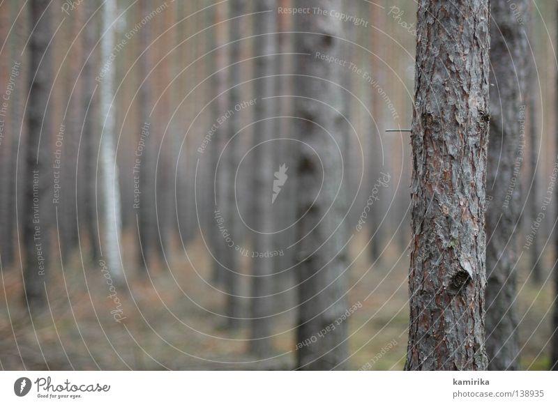 rohbau Winter Raum Umwelt Natur Landschaft Klima Baum Wald Traurigkeit Trauer Gesellschaft (Soziologie) Perspektive Baumrinde Dimension Nadelbaum Kiefer Säule