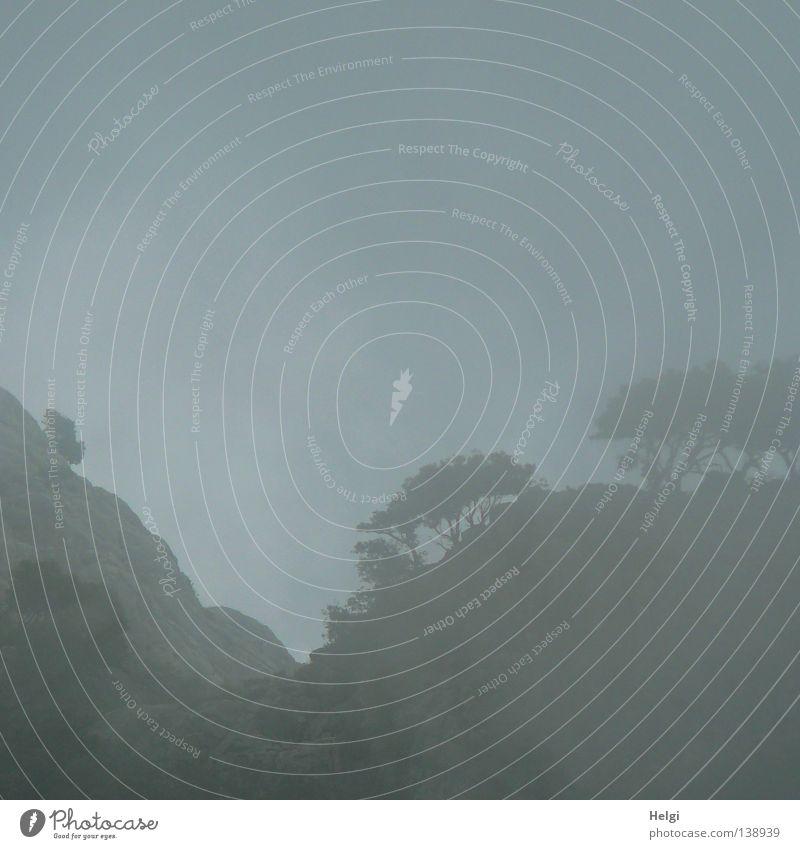 Felsen mit Bäumen im Nebel Nebelwand Wolken schlechtes Wetter Mallorca Ferien & Urlaub & Reisen Baum Berghang Wald steil Am Rand Steigung Baumstamm Pinie dunkel