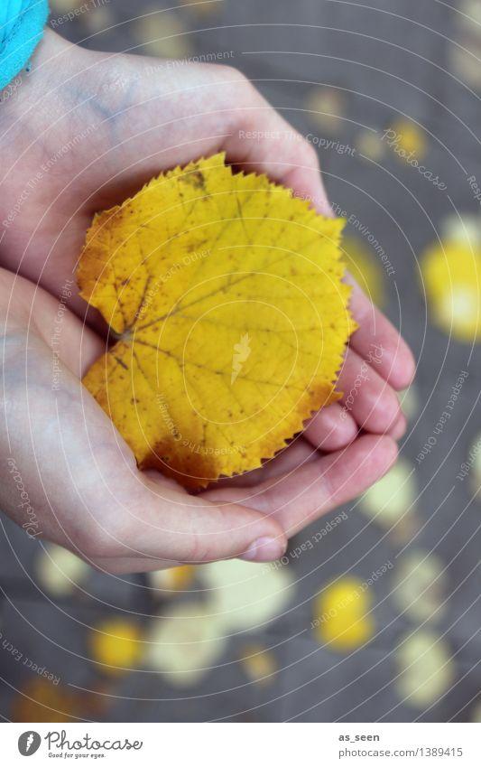 Sterntaler Kindheit Leben Hand Finger Umwelt Natur Pflanze Erde Herbst Blatt Lindenblatt Blattadern Park berühren festhalten leuchten Freundlichkeit gelb gold