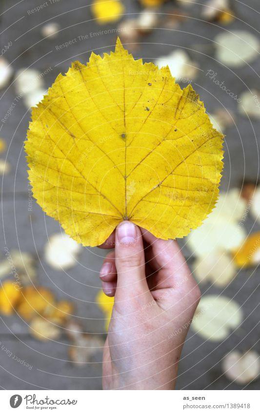 Gold Kindheit Leben Hand Finger Umwelt Natur Pflanze Erde Herbst Blatt herbstlich Herbstlaub Herbstfärbung Lindenblatt festhalten leuchten ästhetisch