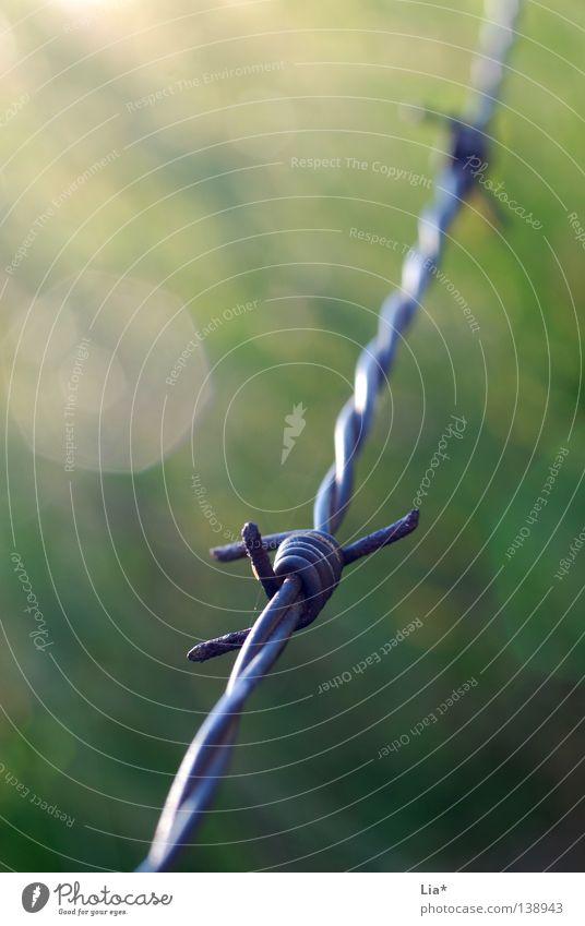 Grenzgebiet grün Herbst Wiese Freiheit Linie Feld Grenze Weide Zaun gefangen Draht Weide Weide Stachel stachelig stechen