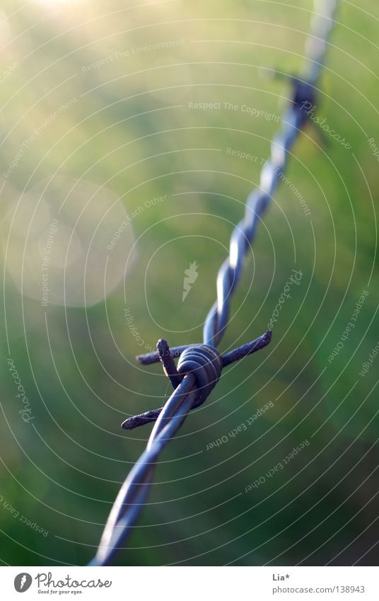 Grenzgebiet Lichterscheinung Freiheit Herbst Wiese Feld Linie stachelig grün Stacheldraht Draht Zaun Grenze Weide stechen piecken einsperren gefangen abgegrenzt