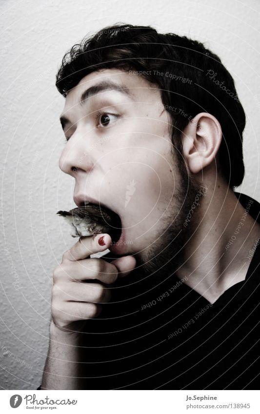 he could eat 'em up. Mann weiß Hand schwarz Erwachsene Junger Mann Tierjunges Essen 18-30 Jahre Vogel außergewöhnlich Mund gefährlich Finger bedrohlich Hemd