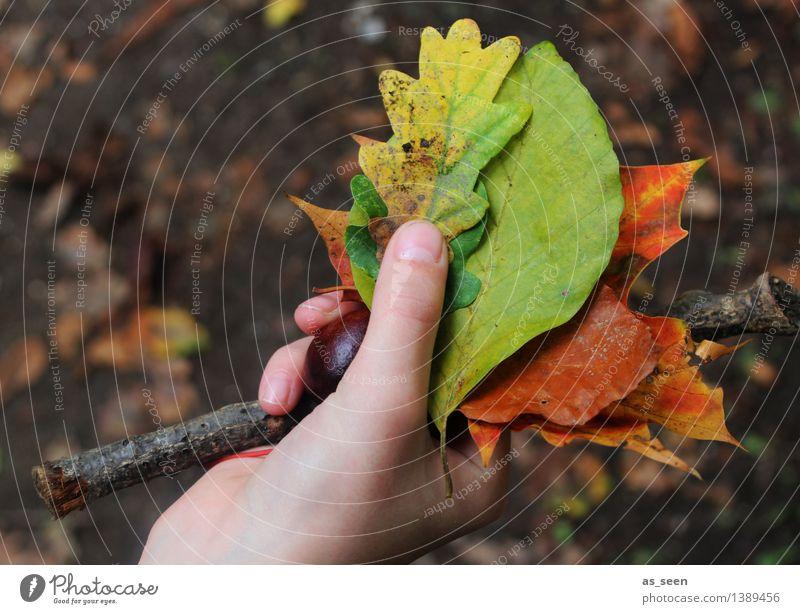 Fundstücke Ausflug Leben Hand Finger Umwelt Natur Pflanze Erde Herbst Blatt Herbstlaub Eichenblatt Buchenblatt Ast Kastanie Ahornblatt Garten Park alt