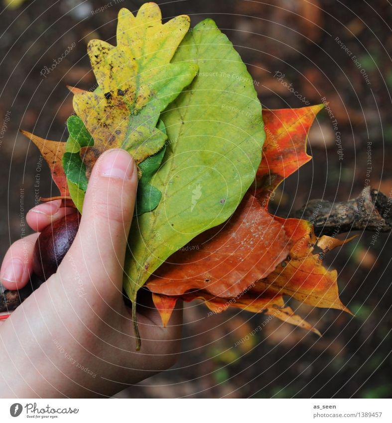 Herbstschätze Kindheit Leben Hand Finger Umwelt Natur Pflanze Erde Klima Blatt Eichenblatt Buchenblatt Ahornblatt Kastanie Ast Park Wald festhalten leuchten