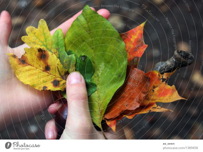 Regenbogen im Herbst Hand Finger Umwelt Natur Pflanze Erde Baum Blatt herbstlich Herbstlaub Buchenblatt Ahornblatt Eiche Eichenblatt Ast Kastanie Wald