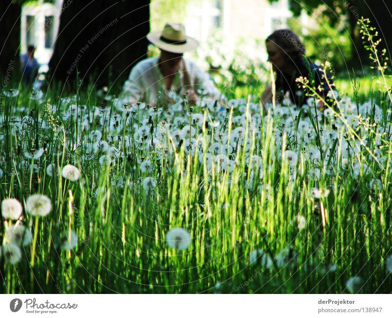 ... und es ist Sommer grün Blume Wiese Schönes Wetter Löwenzahn Picknick Brandenburg