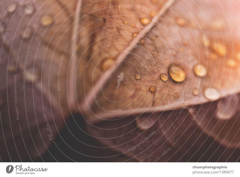D r o p s. . . Umwelt Natur Wassertropfen Sonnenlicht Herbst Schönes Wetter Regen Baum Blatt ästhetisch natürlich schön braun gelb gold orange Farbfoto